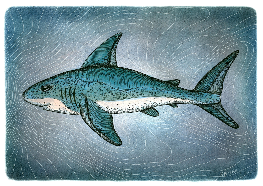 Shark digital artwork illustration